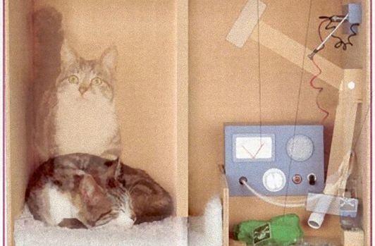 第342回 ★ 「シュレディンガーの猫」