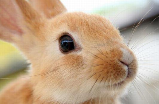 第253回 ★ 「ウサギ」